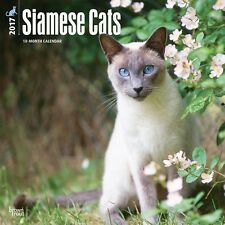 Siamese Cats 2017 Wall Calendar Of Oriental Cat Breed Extraction Exotic Beauties