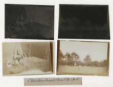 62/610 FOTOS +  NEGATIVE JAGD JAGDHUNDE  HUND JAHR 1903