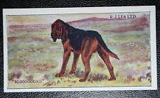 BLOODHOUND   Superb  Original 1923  Vintage Colour Card
