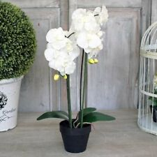 Artificial Cream Orchid Flower Plant in a Pot Tall Potted Orchid 52cm