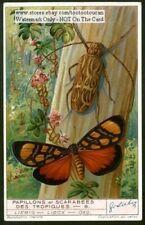 Butterfly Moth Macropus Longimanus 1930s Trade Ad Card