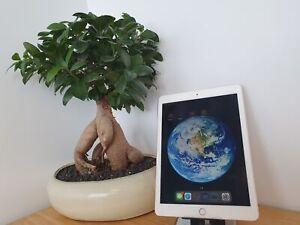 Apple iPad Pro 1st Gen. 9.7in, 128GB, Wi-Fi + Cellular - Rose Gold - WHITE SPOT