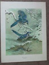 "1969 Vintage Bird Art Print BLUE JAYS IN WINTER by Basil Ede 16x20"""