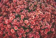 5x3FT Resurrection Red Flowers Spring Vinyl Photography Background Photo Props