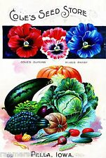 Cole's Mixed Pansy Vintage Flowers Seed Packet Catalogue Advertisement Poster