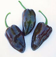 Mulato Isleno Peppers SO Tasty!!!- GREAT GRILLED!!! or Stuffed!! FREE SHIPPING!!