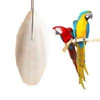Tintenfisch Knochen Papagei Kauen für Wellensittich d Schildkrötenfutter G4F3