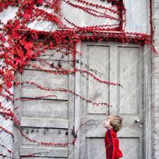 100pcs Boston Red Ivy Japanese Creeper Seeds Grass Send Randomly
