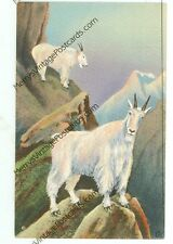 MOUNTAIN GOAT-AMERICAN WILD LIFE OF NORTHWEST AND ALASKA-LINEN-(GOAT-57*)