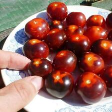 Rare collection Tomato Seeds Cherry Bing Wing Heirloom Seeds