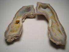 Agatized Coral Specimen, Very Rare (Florida) MI203