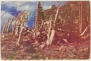 Trail Ridge Estes Park Rocky Mountain National Park Colorado posted Postcard