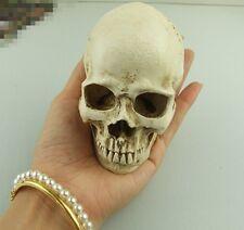 white small Human Skull Replica Resin Model Medical Realistic NEW 11x7x8.5cm