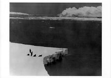 Five Lone Emperor Penguins•Antarctica 1989•Photo by Neelon Crawford POSTCARD