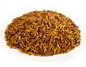 Crunchy Critters edible insects bugs a pint of Mixed crickets & mealworms