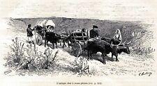 Sardegna: Tradizionale carro a ruote piene. Stampa Antica + Passepartout. 1890