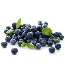 50Pcs Blueberry Tree Seed Fruit Blueberry Seed Potted Bonsai Tree Seeds Plant TY