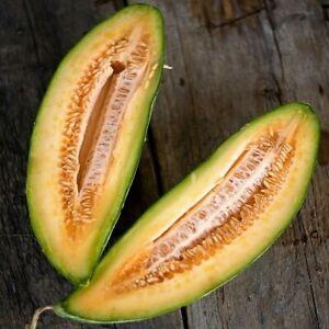 Cantaloupe Seeds Banana Melon 30+ Muskmelon Fruit Seeds USA FREE SHIPPING