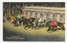 1956 FLORIDA GREYHOUND RACING COLORFUL POSTCARD PC3961
