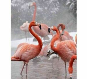 Flamingo Birds Diamond Painting Embroidery Mosaic Wall Display Full Square Drill