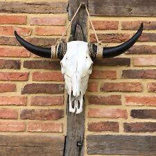 Longhorn Rinder Skull mit riesigen Hörnern - Stier Schädel Bison