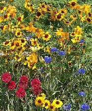 FLOWER MIX DRY NATIVE AND NEW WORLD ANNUALS 10GM 8 SQ METERS
