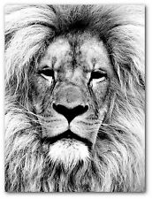 Lion Print, Black and White, Safari Lion Art, 8 x 10 Inches, Unframed