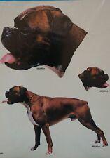 3 Aufkleber Hund, Boxer, Autoaufkleber, Schilder, Witterungsbeständig, Aufkleber