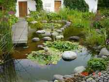 10 Teichpflanzen  MINITEICHsortiment   5 Verschiedene VORBESTELLUNG