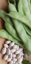 Heirloom ITALIAN ROMA BUSH Bean 100 SEEDS High Yields Stringless