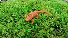 GALLON BAG SHEET MOSS Terrarium Gecko Fairy Garden Dart Frog Live Plant VIVARIUM