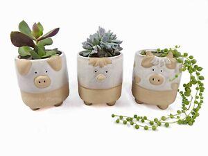 Farmyard Mini Planters Plant Pots Ceramic Pig Cow Chicken Three Designs