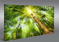 Bild auf Leinwand Leuchtender Wald Sonne Bäume 1K Leinwandbild Wandbild Poster