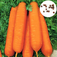 KM_ 900Pcs Carrot Seeds Garden Delicious Vegetable Nutrition Fruit Plants Spir