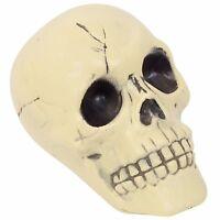 "US Seller Spooky 6"" Plastic Halloween Skull Fast Shipping"