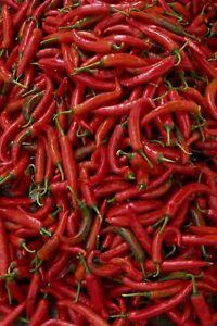 25+ THAI HOT PEPPER SEEDS    US SELLER SHIPS FAST FRESH NON-GMO GARDEN