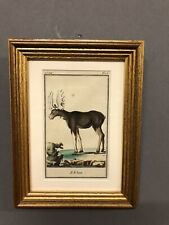 "Antique 18th Century Hand Colored Engraving Of A Moose L' E Lan 9"" X 6 1/2"""
