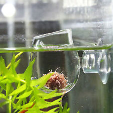 Aquarium Crystal Fish Tank Aquatic Plant Cup Red Shrimp Holder +Sucker