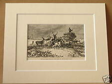 CHATSWORTH PARK WINTER DEER RARE DOUBLE MOUNTED ENGRAVING FROM c1890 PUBLICATION