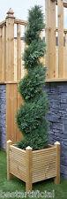 Best Artificial 5ft 150cm Topiary Cedar Spiral Outdoor Conifer Tree alt Ball Bay