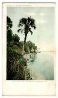 Early 1900s Along the Indian River, Rockledge, FL Postcard