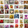 DIY Paint By Numbers Kit Digital Flowers Oil Painting On Canvas Home Wall Decor