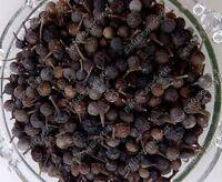 Kabab Chini Cubeb Pepper Whole Piper Cubeba Indian Mughlai Spice Seasoning Raw