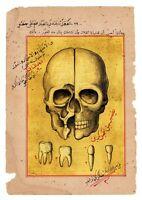 Antique Ottoman Islamic Medical Manuscript Drawing of Skull and Theeth Anatomy