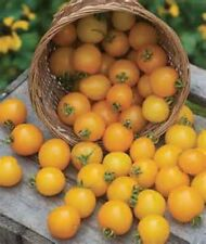 Large Yellow Cherry Tomato! *Heirloom* 20 Seeds! ! Combined S/H!