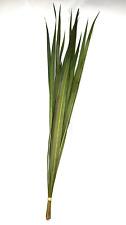 Dried Oceana Palm Leaves Oceana Grass 12 per Bunch for craft floral decor Flower