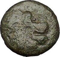 LYSIMACHEIA in THRACE 309BC Lion Grain Ear Authentic Ancient Greek Coin i52012