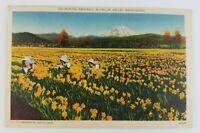 Postcard Linen Picking Daffodils Puyallup Valley Washington Field Flowers
