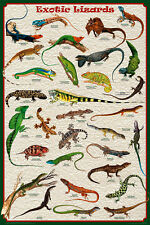 Exotic Lizards Laminated Educational Science Teacher Chart Print Poster 24x36