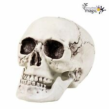 Large Lifesize Scary Skull Graveyard Cemetery Skeleton Halloween Decoration Prop